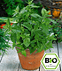 """Pflanzenmix für Hochbeete """"BIO Kräuter"""",6 Pflanzen (6)"""