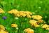 Staudenbeet Ausgewogener Andrang, 12 Pflanzen (6)