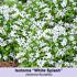 Mein schöner Garten Bienenfreundliches Staudenbeet, 19 Pflanzen (4)