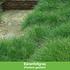 Mein schöner Garten Bodendecker-Set halbschattig, 14 Pflanzen (5)