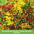 """Mein schöner Garten Gartenbeet """"Insektenweide"""", 31 Knollen + 1 Pflanze (5)"""