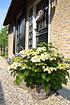 Mein schöner Garten Hortensien Doppio 2-er Set 'Pastel Delight' (5)