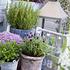 Mein schöner Garten Kräuter-Mix (5)