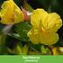 Mein schöner Garten Schneckensicheres Staudenbeet, 20 Pflanzen (5)