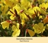 Mein schöner Garten Sommerliebe Stauden-Kollektion, 20 Pflanzen (5)