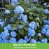 """Mein schöner Garten Staudenbeet """"Bauerngarten"""", 20 Pflanzen (5)"""