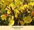 Mein schöner Garten Staudenbeet Sommerliebe, 14 Pflanzen (5)