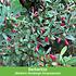 """Mein schöner Garten Vogelschutz-Hecke """"Bird-Lover"""", 14 Pflanzen (5)"""