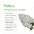 Mein schöner Garten XXL Rispenhortensie 'Limelight' (5)