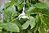 Rion Tomaten-Rank-Kit, 6 Stk. (5)