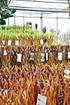 Weide 4-fach geflochten (hell) Säule XL - Salix alba (5)