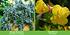"""Mein schöner Garten Staudenbeet """"Blooms for Months"""", 29 Pflanzen (10)"""
