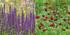 Staudenbeet Ausgewogener Andrang, 12 Pflanzen (10)