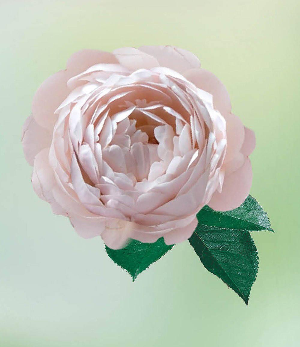 delbard parfum rose vichy 1 pflanze g nstig online. Black Bedroom Furniture Sets. Home Design Ideas
