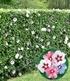Gemischte Hecken-Kollektion,10 Pflanzen (2)