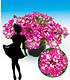 """Hänge-Petunie """"BabyDoll®"""",3 Pflanzen (2)"""