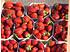 Lubera Erdbeere Malwina® 6er Träger (2)