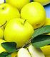 Obst für Balkon & Terrasse,5 Pflanzen (2)