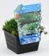 Sauerstoff-Teichpflanzen im Korb,1 Set (2)