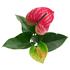 Sense of Home Zimmerpflanze GroßeFlamingoblume rot (2)