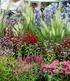 """Staudenbeet """"Blütenträume"""",6 Pflanzen (2)"""