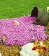 "Teppichphlox ""Emerald Pink"" 25 Stk.,25 Pflanzen (2)"