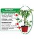 Veredelte runde Tomaten-Raritäten,4 Pflanzen (2)