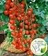 Veredelte Tomaten-Kollektion La sélection du Chef®,4 Pflanzen (2)
