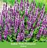 """Mein schöner Garten Bienenfreundliches Gartenbeet """"Nektar-Oase"""", 21 Pflanzen (8)"""