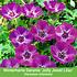 Mein schöner Garten Schneckensicheres Staudenbeet, 20 Pflanzen (8)