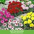 """Mein schöner Garten Staudenbeet """"Blooms for Months"""", 29 Pflanzen (8)"""