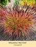 Mein schöner Garten Staudenbeet Sommerliebe, 14 Pflanzen (8)