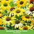 """Mein schöner Garten Staudenbeet """"Sunshine"""", 20 Pflanzen (8)"""