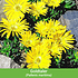 Mein schöner Garten Niedrige Staudenklassiker, 14 Pflanzen (7)