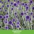 Mein schöner Garten Schneckensicheres Staudenbeet, 20 Pflanzen (7)