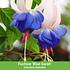 """Mein schöner Garten Staudenbeet """"Blooms for Months"""", 29 Pflanzen (7)"""