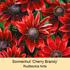 Mein schöner Garten Staudenbeet Sommerliebe, 14 Pflanzen (7)