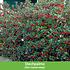 """Mein schöner Garten Vogelschutz-Hecke """"Bird-Lover"""", 14 Pflanzen (7)"""