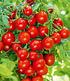Bienenfreundliches Naschkörbchen,3 Pflanzen (4)