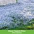 Mein schöner Garten Bodendecker-Set halbschattig, 14 Pflanzen (4)