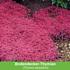 Mein schöner Garten Duftendes Staudenbeet, 22 Pflanzen (4)