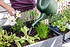 Mein schöner Garten Hochbeet Bundling (4)