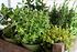Mein schöner Garten Kräuter-Mix (4)