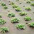 NOOR Mulchvlies für Salatanbau 1,6x4,2 m Salat Vlies (4)