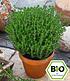"""Pflanzenmix für Hochbeete """"BIO Kräuter"""",6 Pflanzen (4)"""