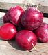 "Säulenpflaume ""Colunar Ruby"",1 Pflanze (4)"