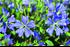 Staudenbeet Ausgewogener Andrang, 12 Pflanzen (4)