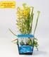 "Teichpflanzen-Korb ""Mix 3 Pflanzen"",1 Set (4)"