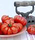 """Fleischtomate """"Costoluto Genovese"""",1 Pflanze (3)"""