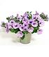 """Hänge-Petunie Hellviolette """"LavenderSKY®"""",3 Pflanzen (3)"""